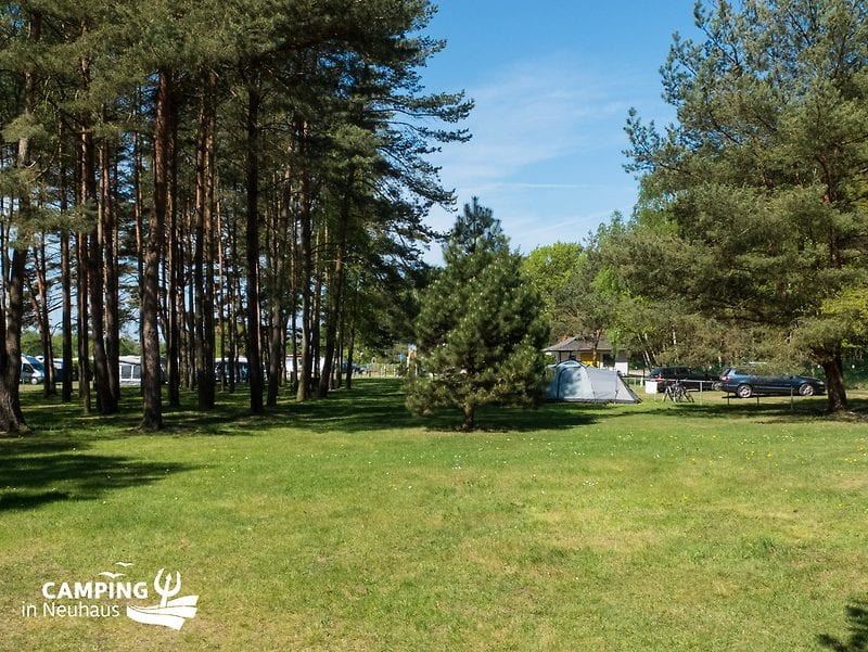 Woodland area for tents at Camping in Neuhaus
